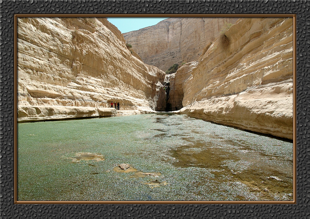 Negev - The Ovdat oasis