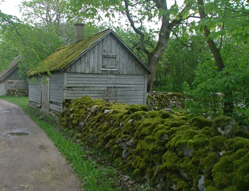 006 The walls are covered with moss.jpg