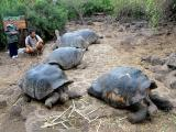 009 Julian (our guide) with giant tortoises.jpg