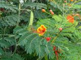 048 Unknown flower.jpg