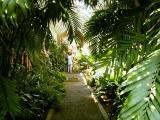 Botanical Garden, Puerto de la Cruz