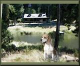 beagle challenge.jpg