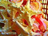 starfish golden.jpg
