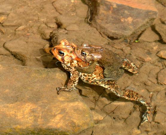 Making little toads