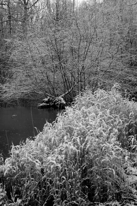En forêt de Rambouillet après une nuit fraîche