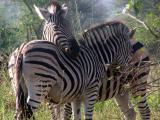 2004-Aug-15 Kruger-Park-Trip