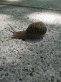 Snail Best Focus