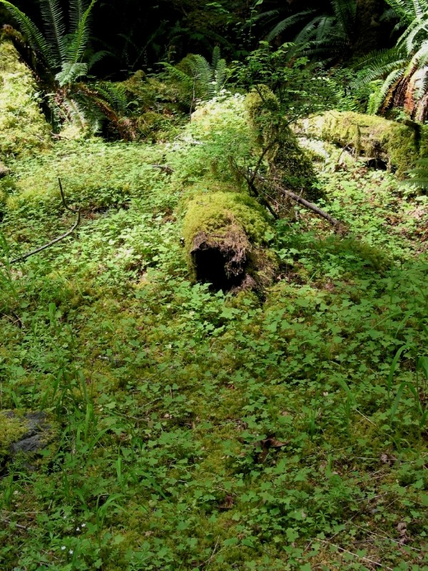 Log Covered in Greenery