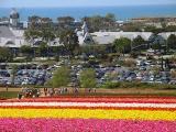 Carlsbad - Flower Fields 1