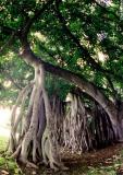 tree01jpg.jpg