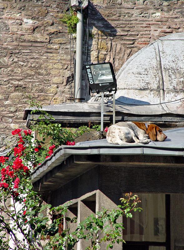 Aya Sofya watchdog watching?