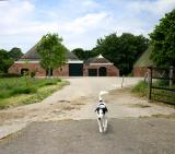 Joop's Dog Log - Wednesday June 02