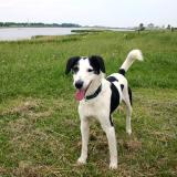 Joop's Dog Log - Saturday June 05