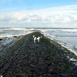 Joop's Dog Log - Sunday June 06