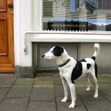 Joop's Dog Log - Tuesday June 08