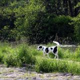 Joop's Dog Log - Wednesday June 09