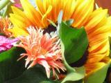 Flores de Holanda