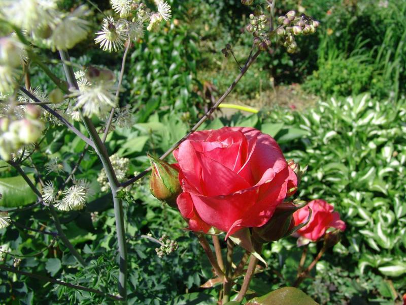 Fleurs_Tony23.jpg