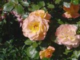 Fleurs_Tony10.jpg