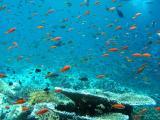Under Water Gallery