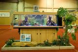 Au paradis des poissons