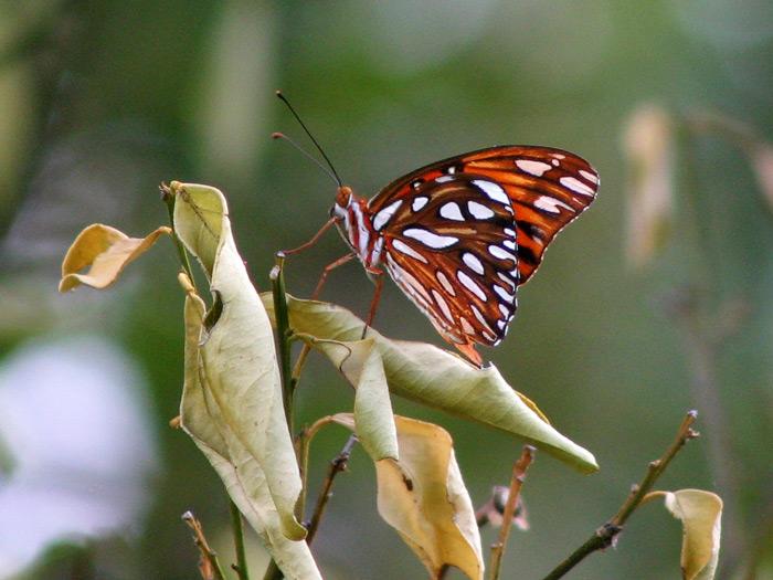 Butterfly-Alights.jpg