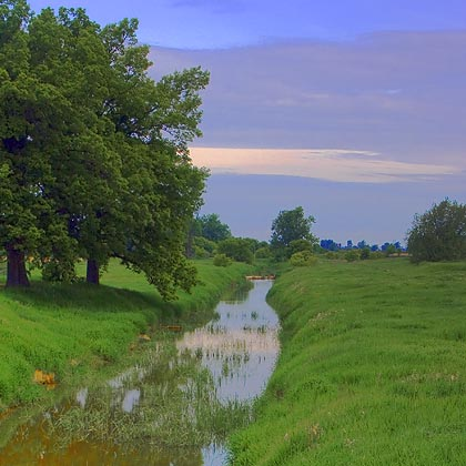 Trees & Ditch