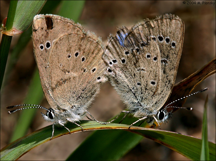 Butterfly Acrobatics