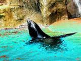 Sea Lion.jpg(319)