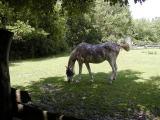 Horse.jpg(167)