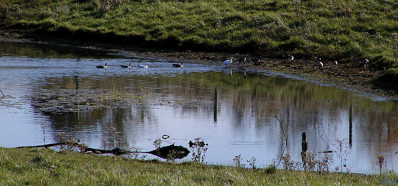 Reflections on the pond.jpg