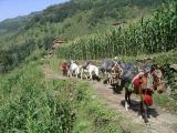 Annapurna Trek - Supplies Train