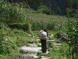 Woman Carrying Load Upto Village - Annapurna