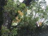 Chitwan- Jungle Trek - Wild Orchids