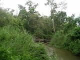 Chitwan- Jungle Trek - Foot Bridge