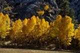 4901-Sierra-Color.jpg