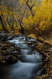 4802-Streaming-through-Fall.jpg