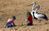 Pelicans and kids