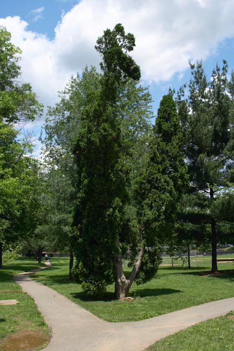 Split Path Split Tree.jpg