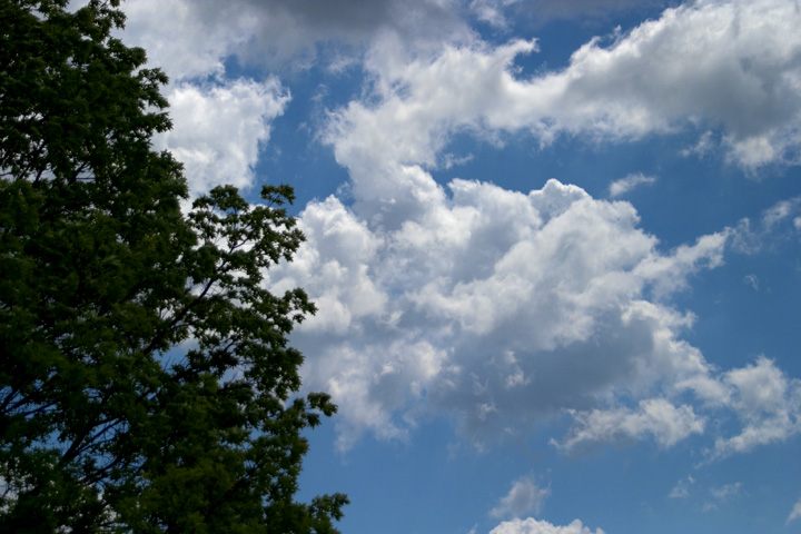 Trees and Clouds 2.jpg