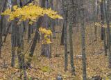 Minnesota Fall