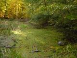 Par les vastes forêts, à l'heure vespérale