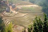 rice fields in the fog.jpg