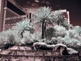 Las Vegas-9