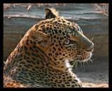 Big Cat October 2004