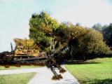 Halliburton Cleanup.jpg