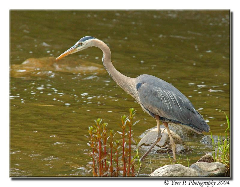 GBH ...  (ISO 800)