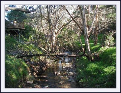 Sturt Creek in June