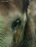 As High as an Elephant's Eye