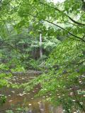 2004-06-21: Moore Pond Transect